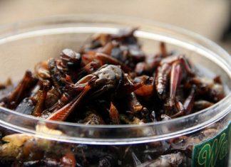 8 Kuliner Esktrim Jogja Yang Bikin Penasaran Part Satu