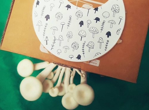 Beginilah Peluang Usaha Start Up Pertanian Jamur Dengan Growbox