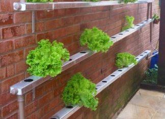 Peluang Usaha Rumahan Agro Modern Dengan Sistem Hidroponik