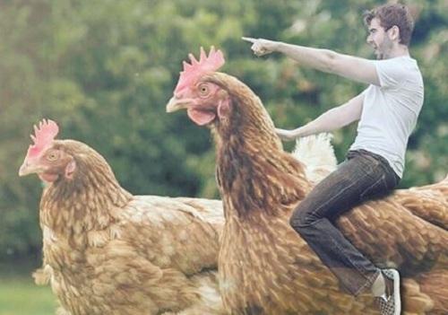 Usaha Modal Kecil Menguntungkan Usaha Pemotongan Ayam Omzet 7 Juta-an