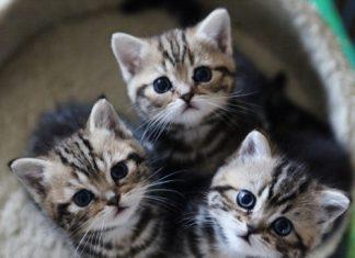 anak-kucing-yang-lucu-dan-menggemaskan-by-favim-com