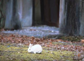 Mengungkap: Sebuah Mystery di Pulau Kelinci Yang Tidak Kita Ketahui Kebenarannya