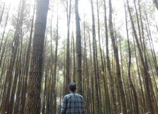 Hutan Pinus Mangunan, Alternative Tempat Wisata Hits di Jogja Untuk Rombongan