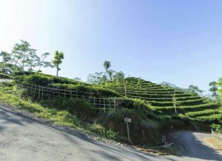 Kebun Teh Nglinggo Kulon Progo Yang Wajib Dikunjungi, Pencari Embun