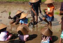 Desa Wisata Brayut: Cocok Buat Acara Komunitas, Edukasi, dan Arisan