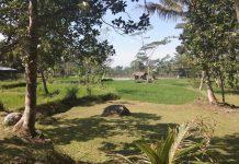 Desa Wisata Ledok Sambi: Cocok Buat Family Gathering atau Outbound