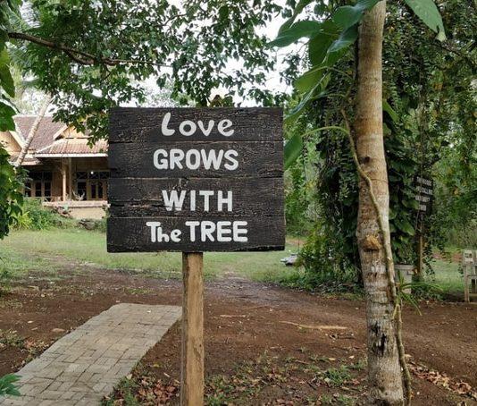 Museum Kayu Wanagama: Untuk Anda Yang Ingin Mempelajari Kehutanan