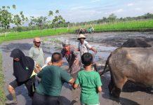 Museum Tani Jawa: Belajar Teknik Pertanian Dari Masa Lalu Hingga Kini