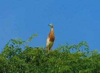 Desa Wisata Ketingan: Burung Kuntul dan Panorama Alamnya Yang Indah