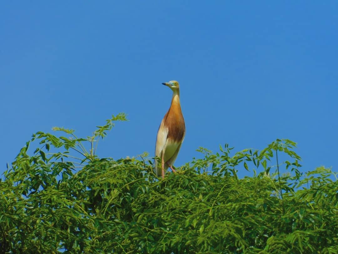 Desa Wisata Ketingan Burung Kuntul Dan Panorama Alamnya Yang Indah