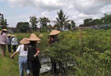 Desa Wisata Tanjung: Memiliki Visi Hijau Desaku dan Lestari Budayaku